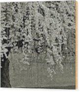 A Single Cherry Tree In Bloom Wood Print