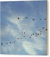 A Skein Of Canada Geese Wood Print