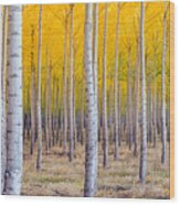 A Stand Of Trees Begins To Weather Fall Wood Print