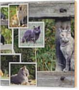 A Variety Of Cats Wood Print
