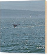 A Whale's Tail Above Water With Sail Boat In The Background Wood Print