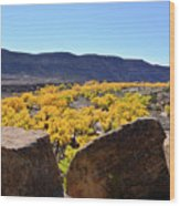 Gorgeous View Of Golden Cottonwood Trees In Canyon Wood Print