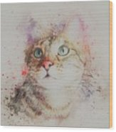 Abyssinian Cat Wood Print