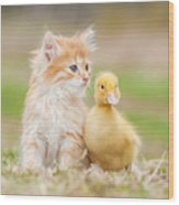 Adorable Red Kitten With Little Duckling Wood Print