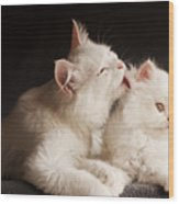 Adorable White Persian Cats Mother Wood Print