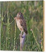 Adult Burrowing Owl Wood Print