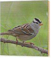 adult White-crowned Sparrow Wood Print
