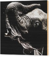 African Elephant With The Trunk Raised Wood Print