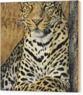 African Leopard Portrait Wildlife Rescue Wood Print