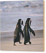 African Penguins Spenicus Wood Print