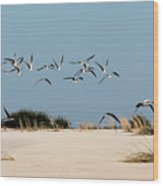 African Skimmers Wood Print