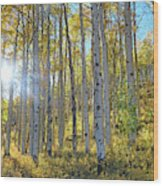 Afternoon Aspens Wood Print