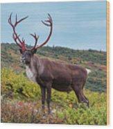 Alaska Caribou In Denali National Park Wood Print