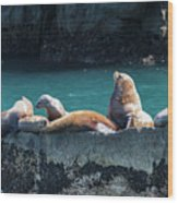 Alaska Steller Sea Lions Wood Print