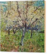 Almond Orchard Wood Print
