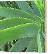Aloe Vera - Healing Plant Wood Print