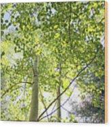 Alpine Glow Wood Print