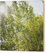 Alpine Sunlight In The Rockies Wood Print