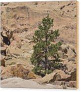 Amazing Life On The Sandstone Cliffs Wood Print