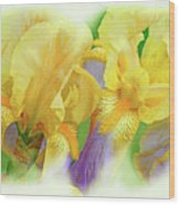 Amenti Yellow Iris Flowers Wood Print