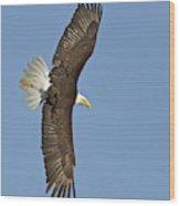 American Bald Eagle In Flight IIi Wood Print