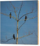 American Crows In Bare Tree Wood Print