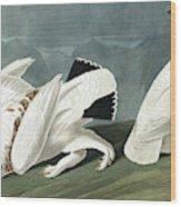 American Ptarmigan, Tetrao Mutus, White Tailed Grous, Tetrao Leucurus Wood Print