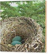 American Robin Nest Wood Print