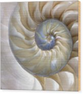 An Amazing Fibonacci Pattern In A Wood Print