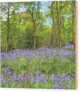 An English Bluebell Wood Wood Print