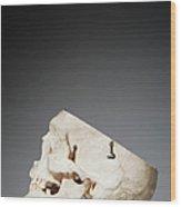 Anatomical Model Of Human Skull Wood Print