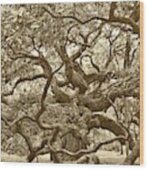 Angel Oak Drama In Vintage Sepia Wood Print