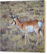 Antelope Buck Wood Print