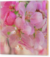 Apple Blossom 12 Wood Print