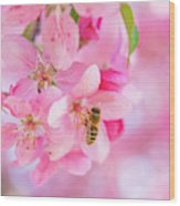 Apple Blossom 2 Wood Print