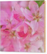 Apple Blossom 5 Wood Print
