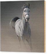 Arabian Horse Running Through Dust Wood Print