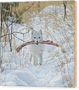 Arctic Fox Alopex Lagopus In White Wood Print