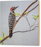 Arizona Ladderback Woodpecker Wood Print