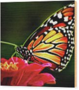 Artistic Monarch Wood Print