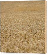 A Field Of Wheat Wood Print