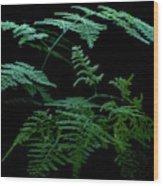 Asparagus Fern Wood Print