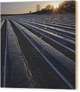 Asparagus Field Wood Print