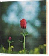 Aspecial Flower  Wood Print