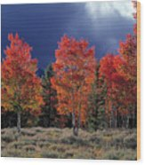 Aspen Light Wood Print