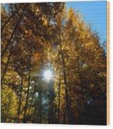 Aspens Sunlight 2 Wood Print