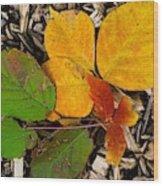 Assiniboine Forest Floor No.1 Wood Print