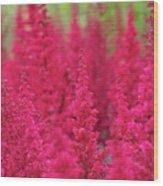 Astilbe Fanal Flowers Wood Print