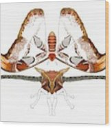 Atlas Moth2 Wood Print