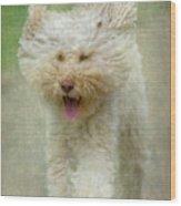 Australien Labradoodle Dog Wood Print